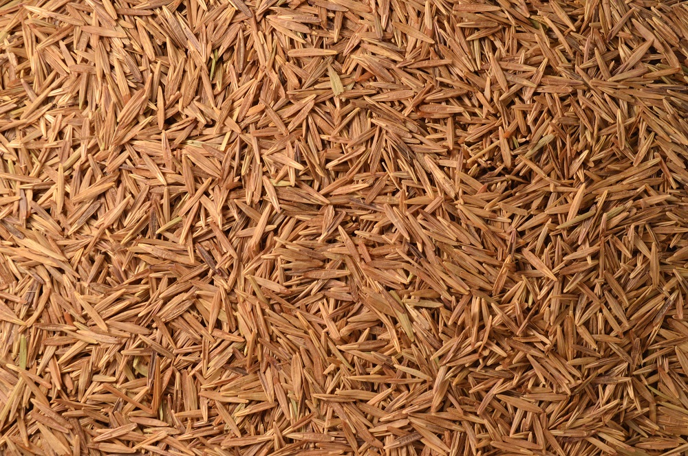 Meadow Brome (Certified Cache)
