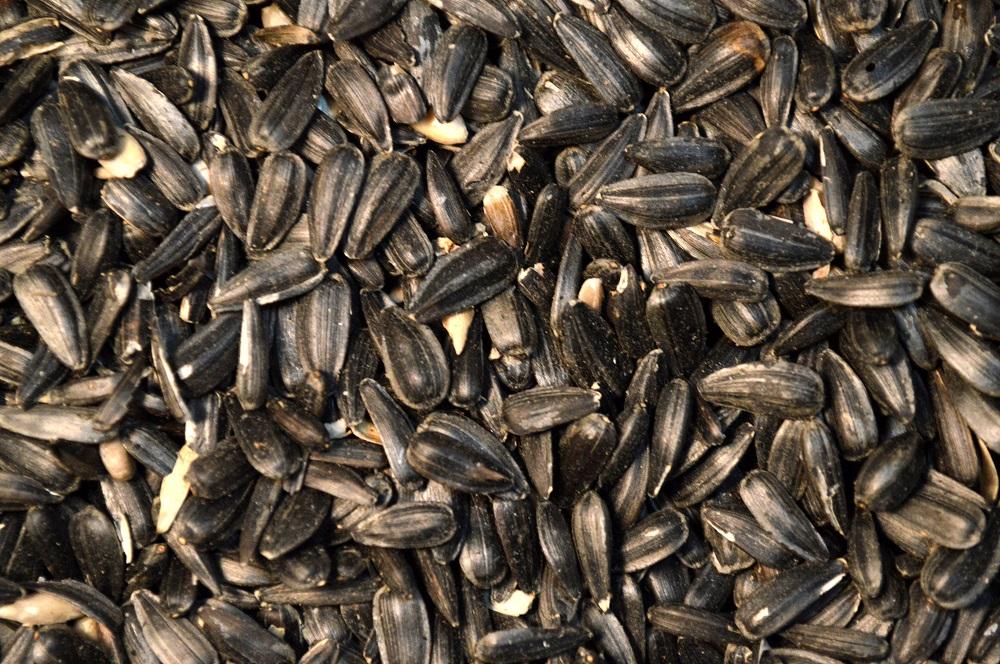 Sunflower: Black Oil Seed